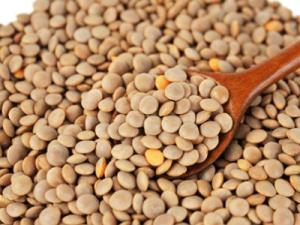 렌틸 콩 효능 9가지 확인